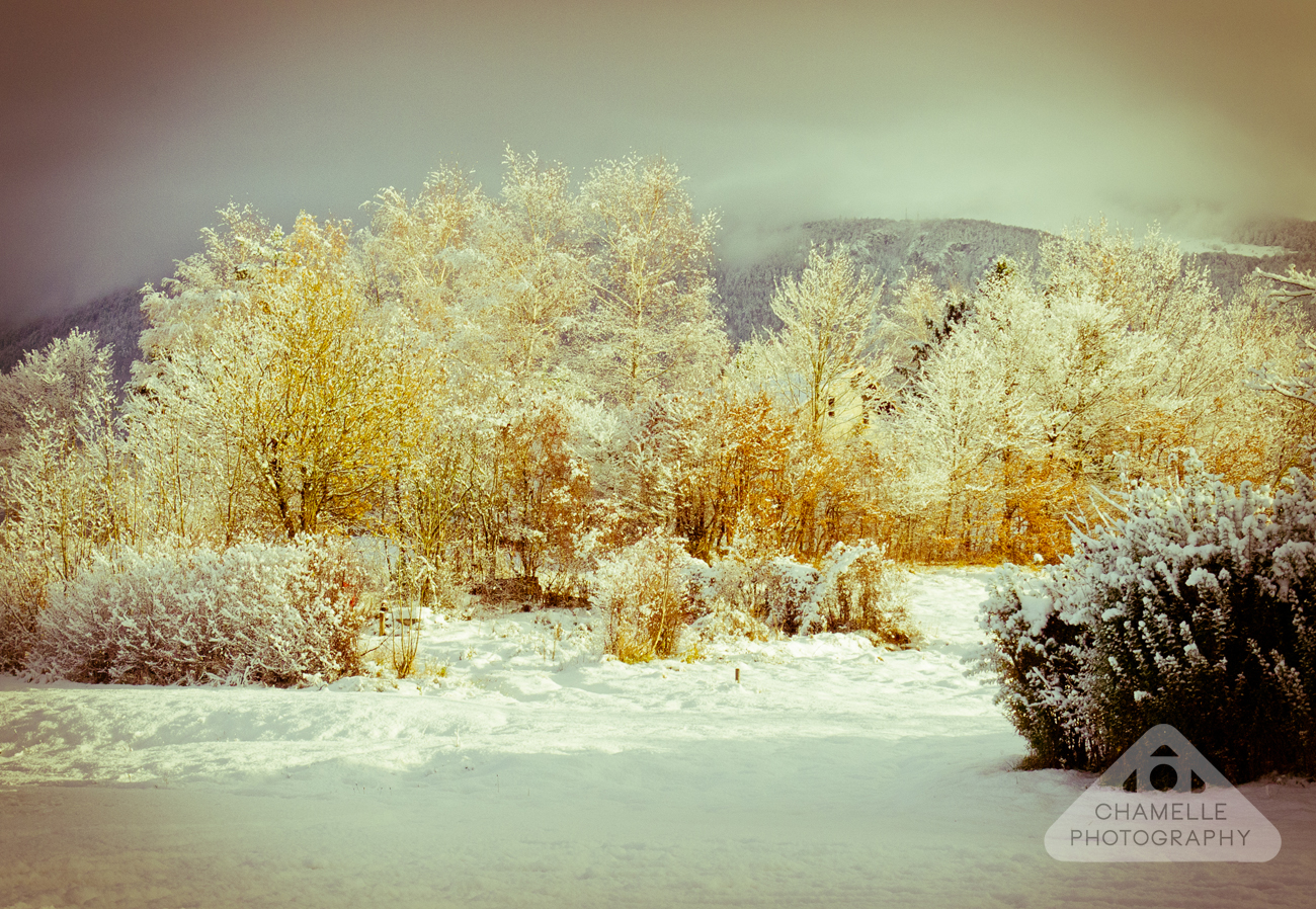 Snow Photo Exhibition - Chamelle Photography