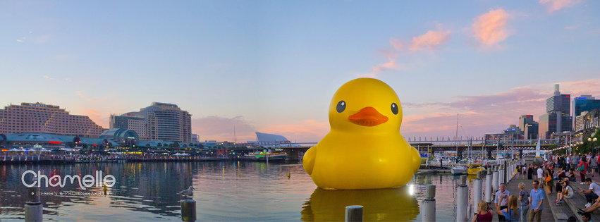 giant-duck-darlingharbour-sydney-hofman-panorama-chamellephoto