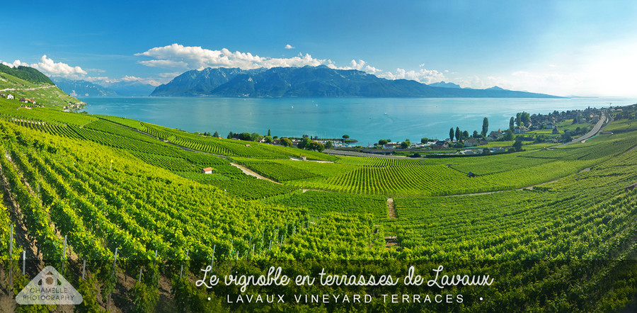 Lavaux, Switzerland - Chamelle Photography
